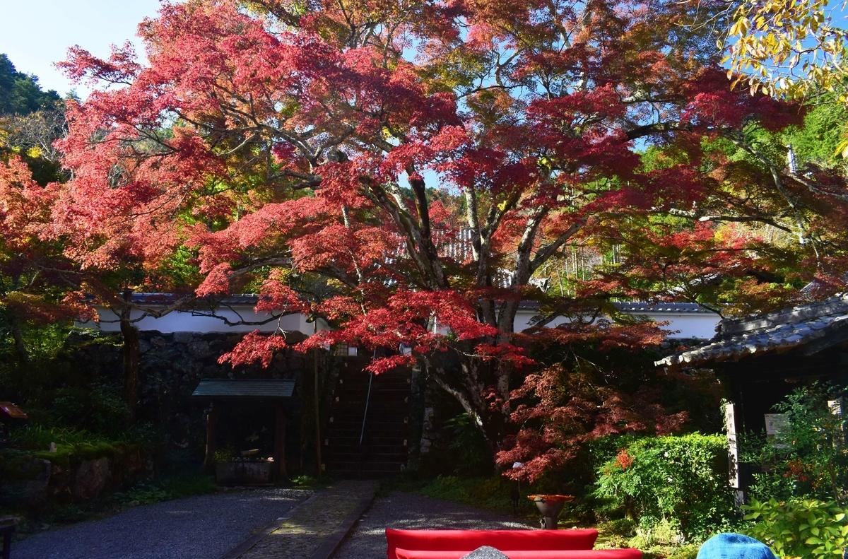 神蔵寺「天上の木」の紅葉 見頃 2019年11月9日 撮影:MKタクシー