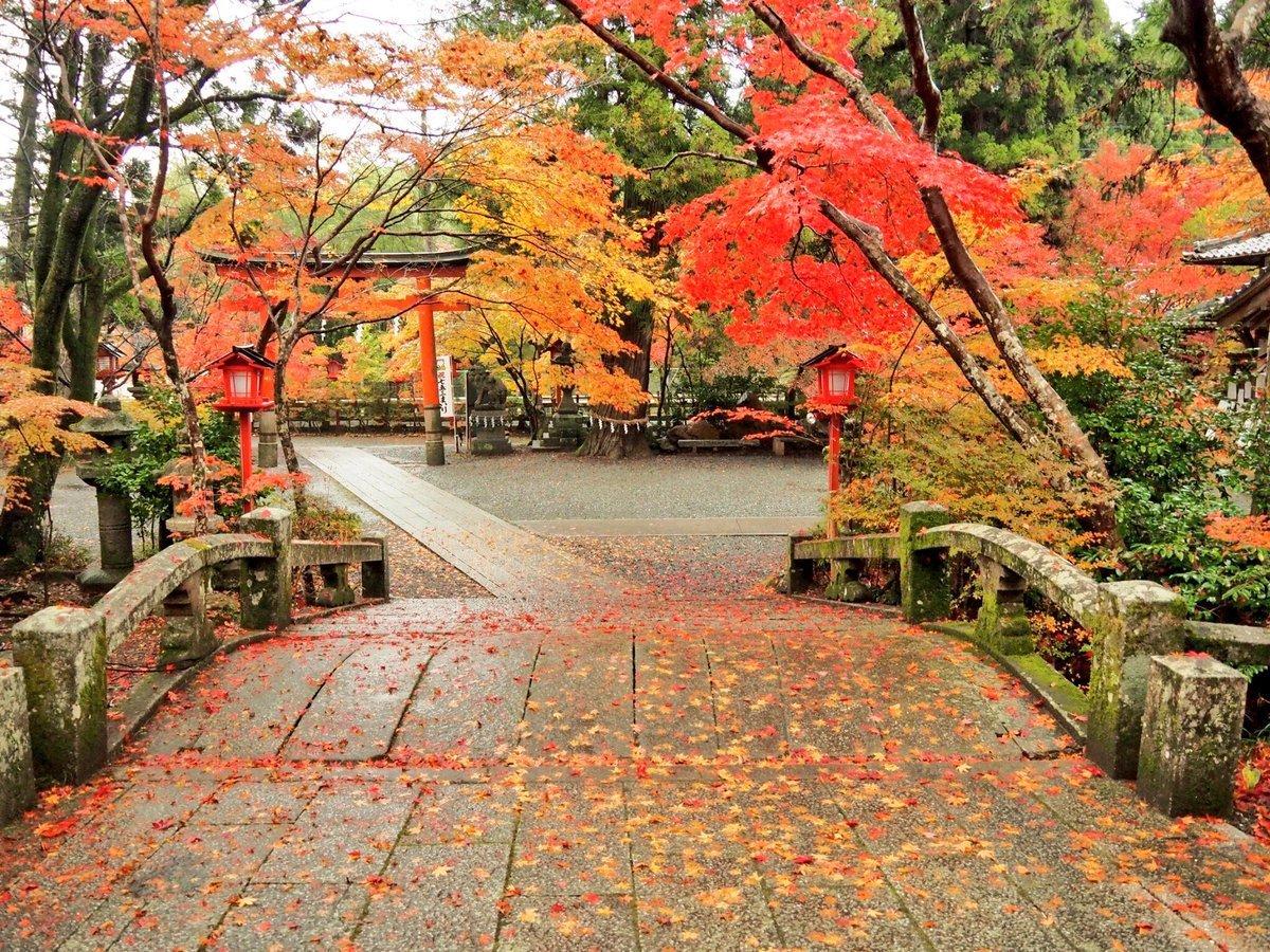 鍬山神社の紅葉 見頃 2017年11月11日 撮影:MKタクシー