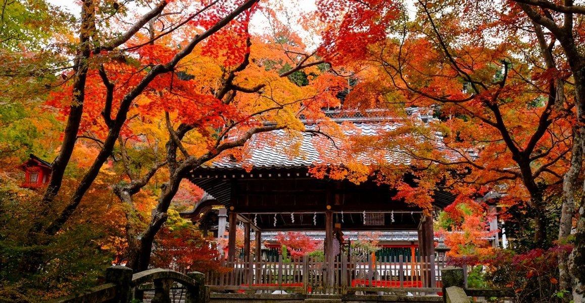 鍬山神社の紅葉 見頃 2019年11月11日 撮影:MKタクシー