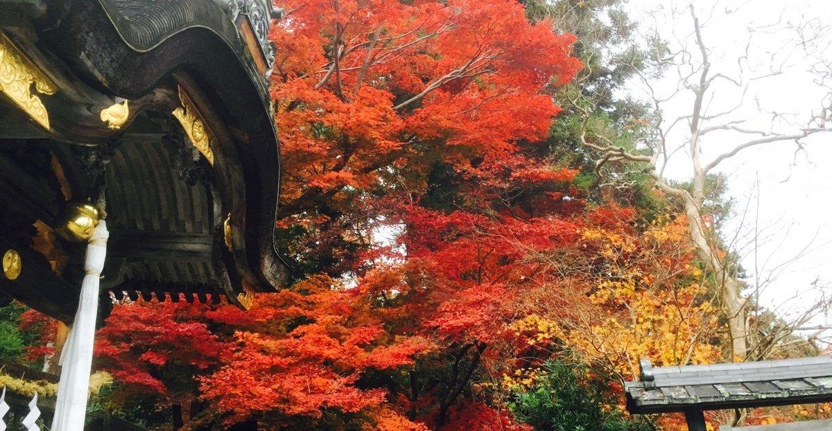 鍬山神社の紅葉 見頃 2016年11月20日 撮影:MKタクシー