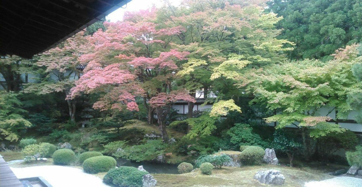 御座所庭園の紅葉 色づきはじめ 2015年11月1日 撮影:MKタクシー