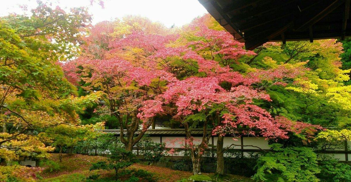 御座所庭園の紅葉 見頃 2017年11月11日 撮影:MKタクシー