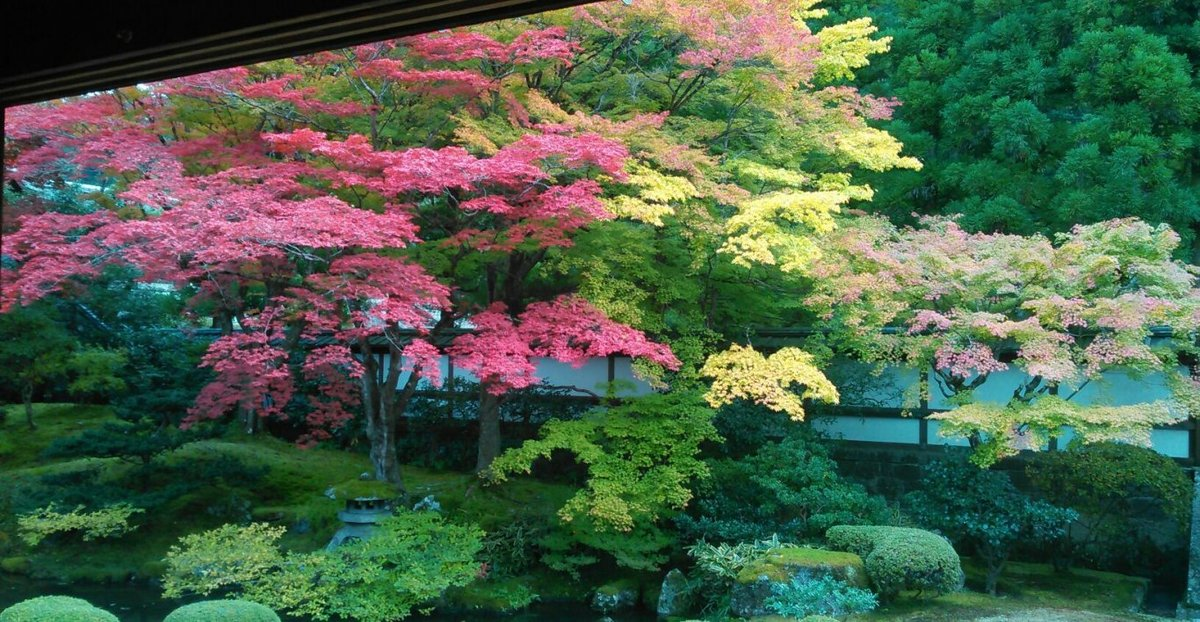 泉涌寺・御座所庭園の紅葉 見頃 2016年11月13日 撮影:MKタクシー