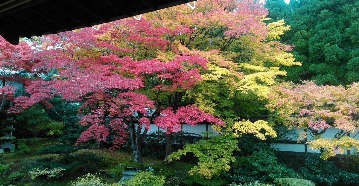 泉涌寺・御座所庭園の紅葉 見頃 2016年11月15日 撮影:MKタクシー