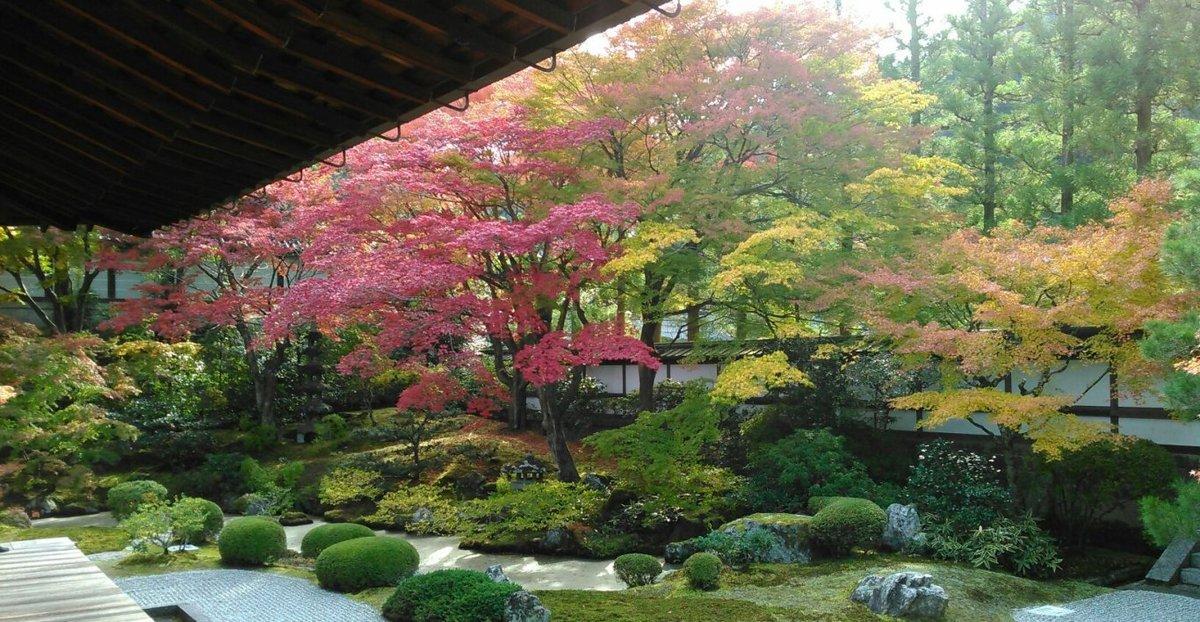 泉涌寺・御座所庭園の紅葉 見頃 2014年11月16日 撮影:MKタクシー