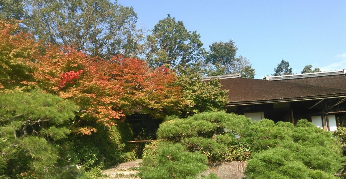 大河内山荘・大乗閣の紅葉 色づきはじめ 2016年10月19日 撮影:MKタクシー