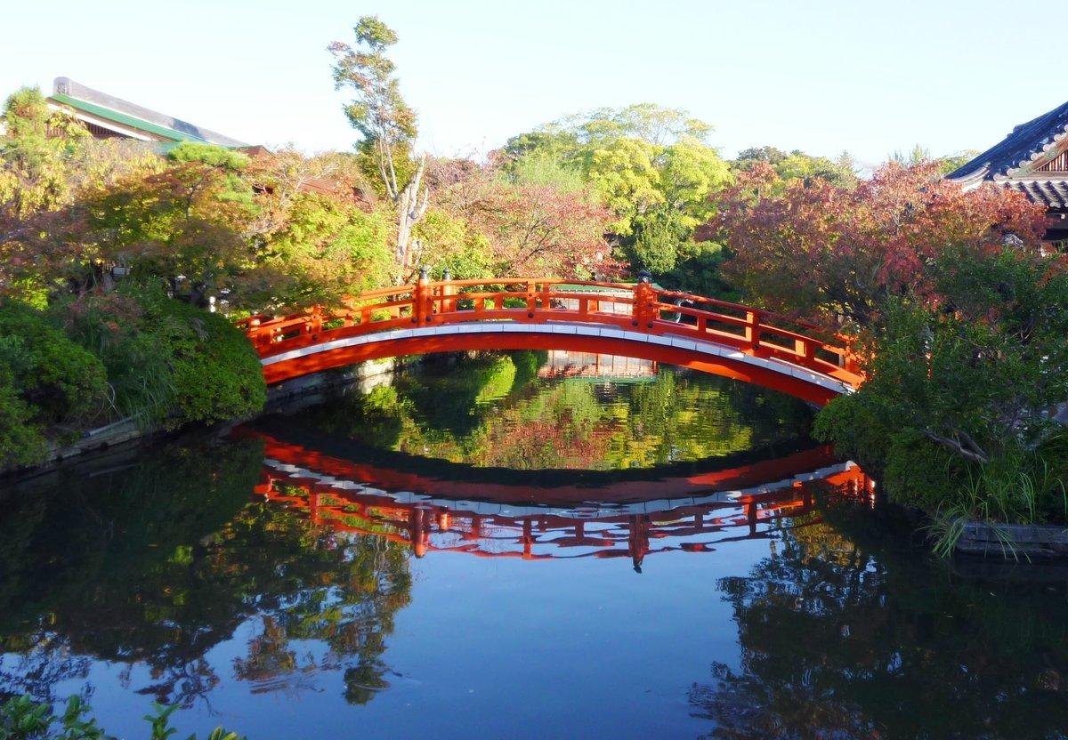 神泉苑・法成橋の紅葉 色づきはじめ 2010年11月4日 撮影:MKタクシー