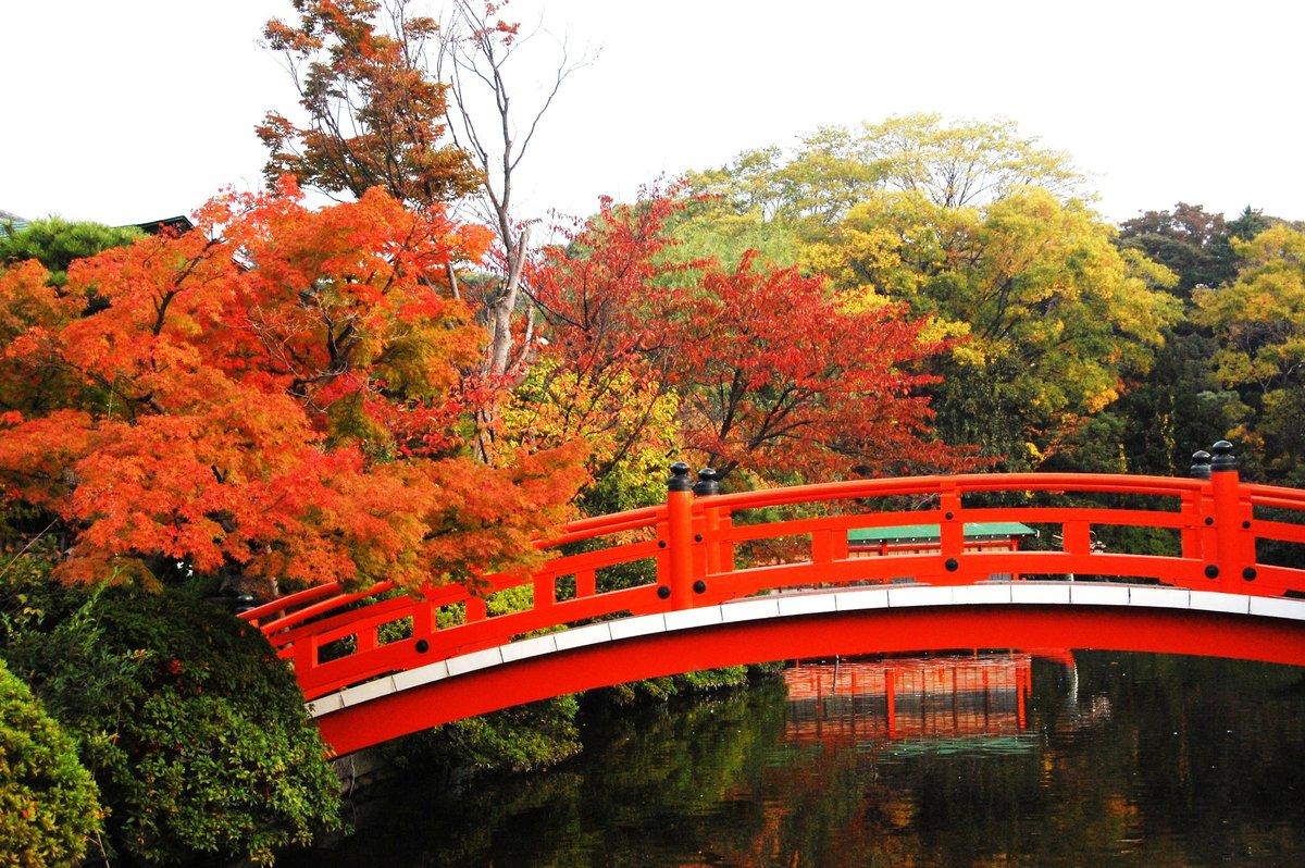 神泉苑・法成橋の紅葉 見頃 2007年11月11日 撮影:MKタクシー