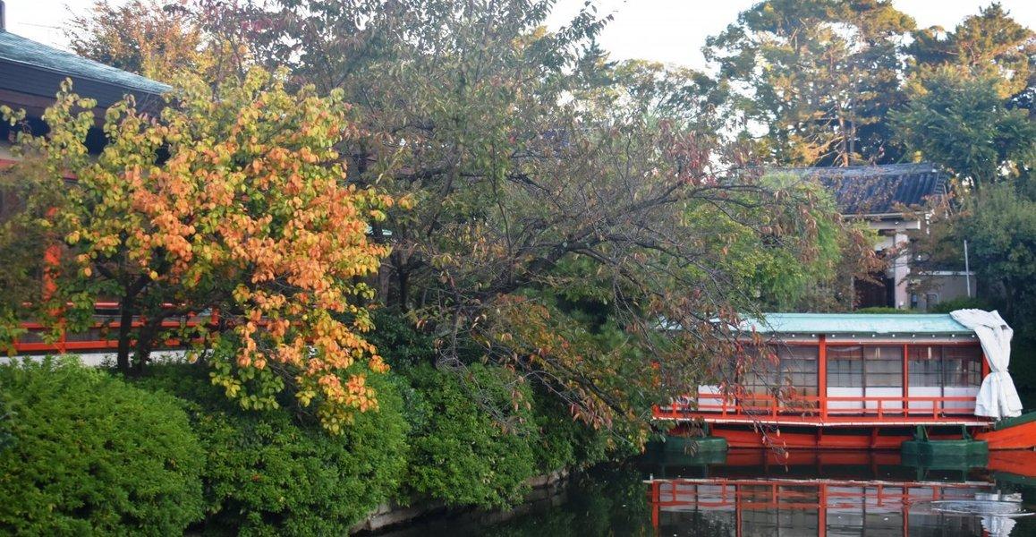 神泉苑・法成橋の紅葉 見頃近し 2019年11月6日 撮影:MKタクシー