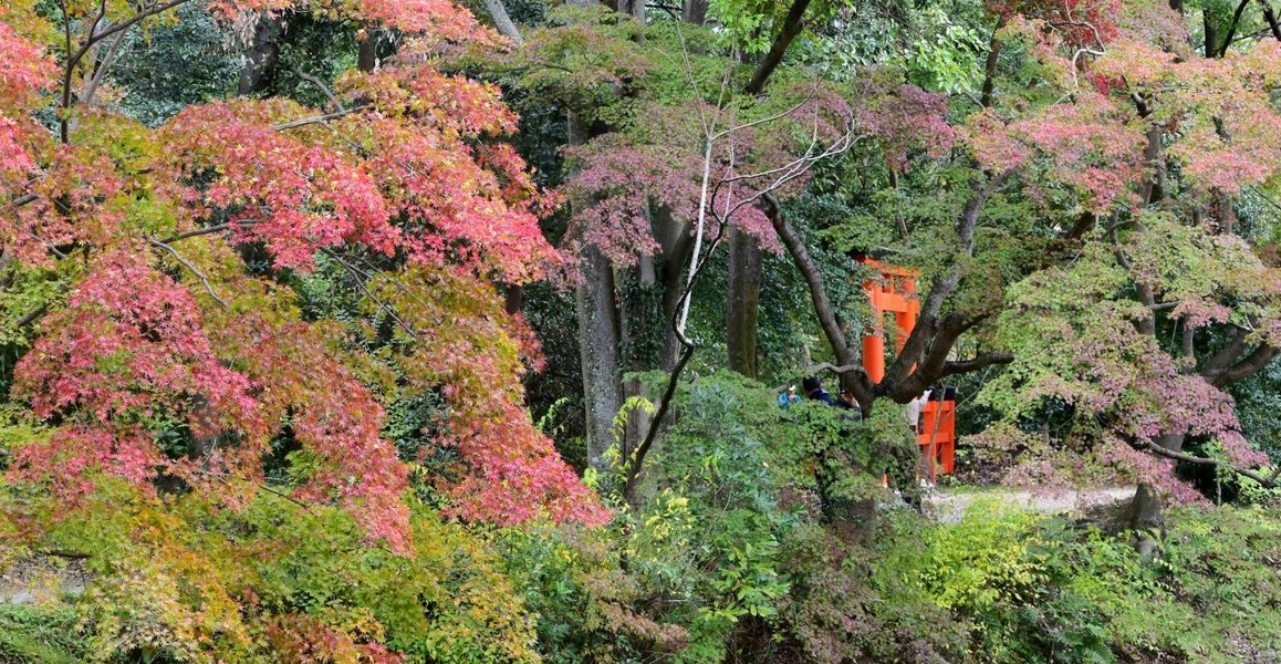 京都府立植物園・半木の森の紅葉 色づきはじめ 2018年11月4日 撮影:MKタクシー