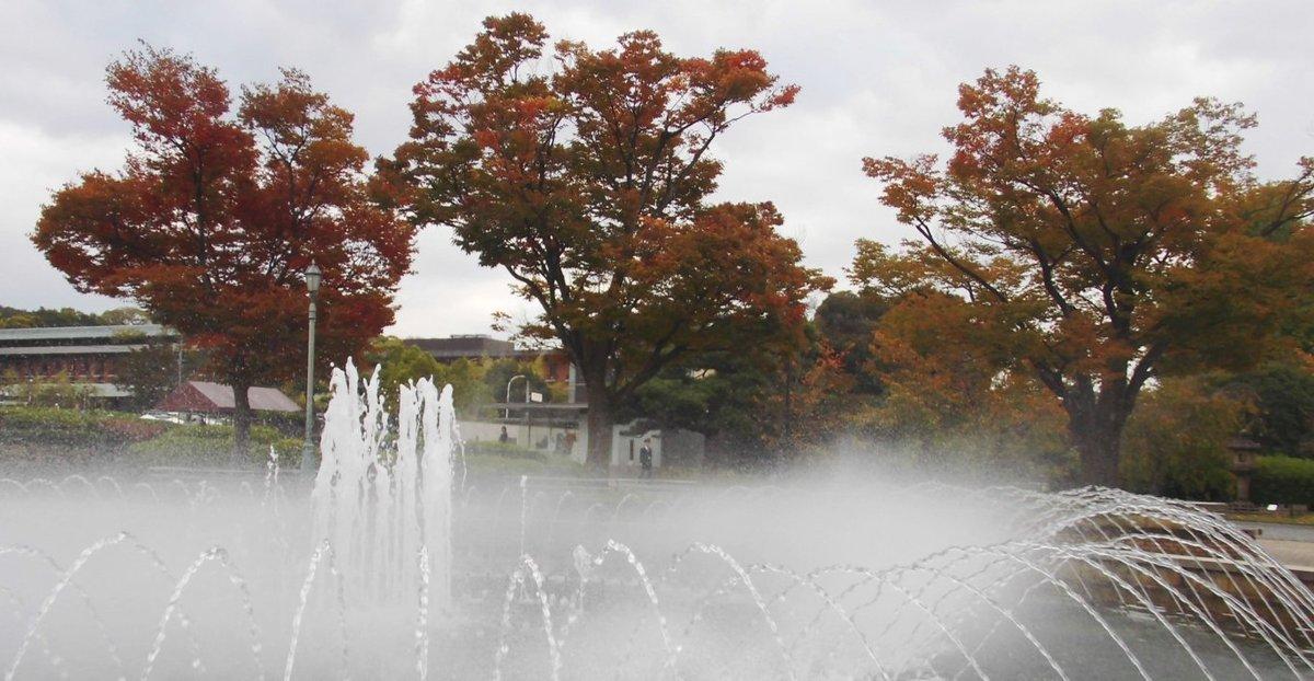京都国立博物館・ケヤキの紅葉 見頃近し 2016年10月29日 撮影:MKタクシー