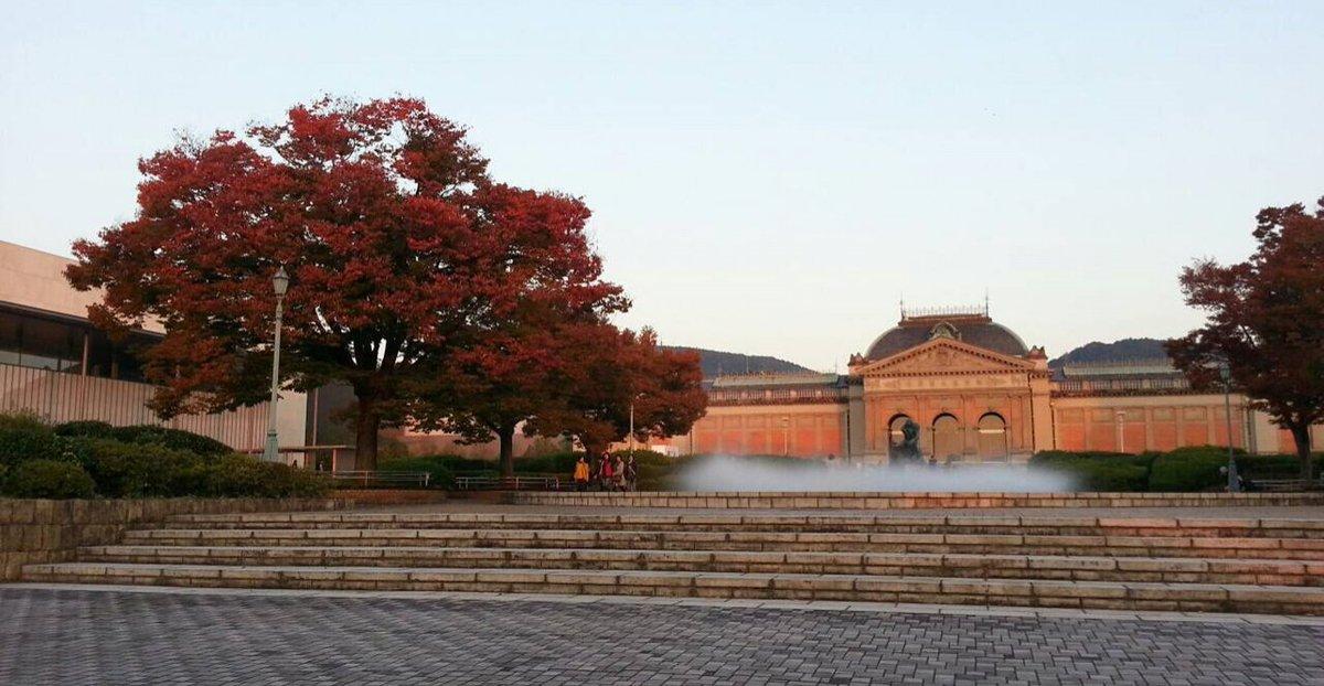 京都国立博物館・ケヤキの紅葉 見頃 2016年11月5日 撮影:MKタクシー