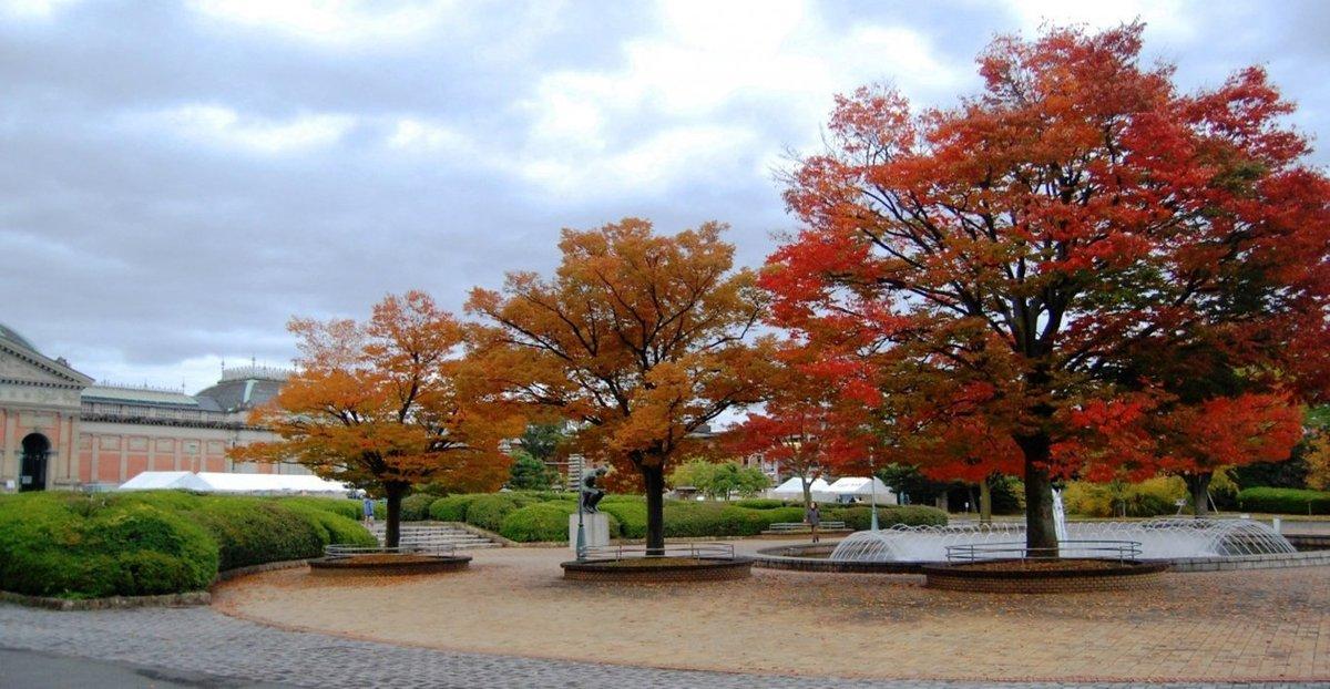 京都国立博物館・ケヤキの紅葉 見頃 2008年11月8日 撮影:MKタクシー