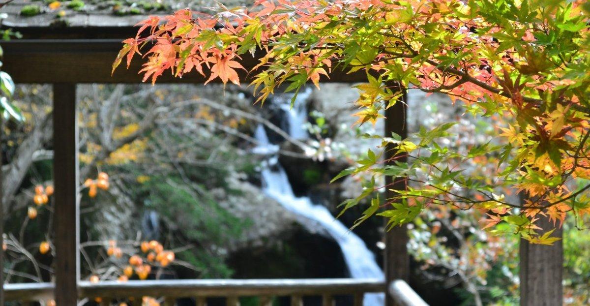 るり渓・鳴滝の紅葉 散りはじめ 2017年11月12日 撮影:MKタクシー