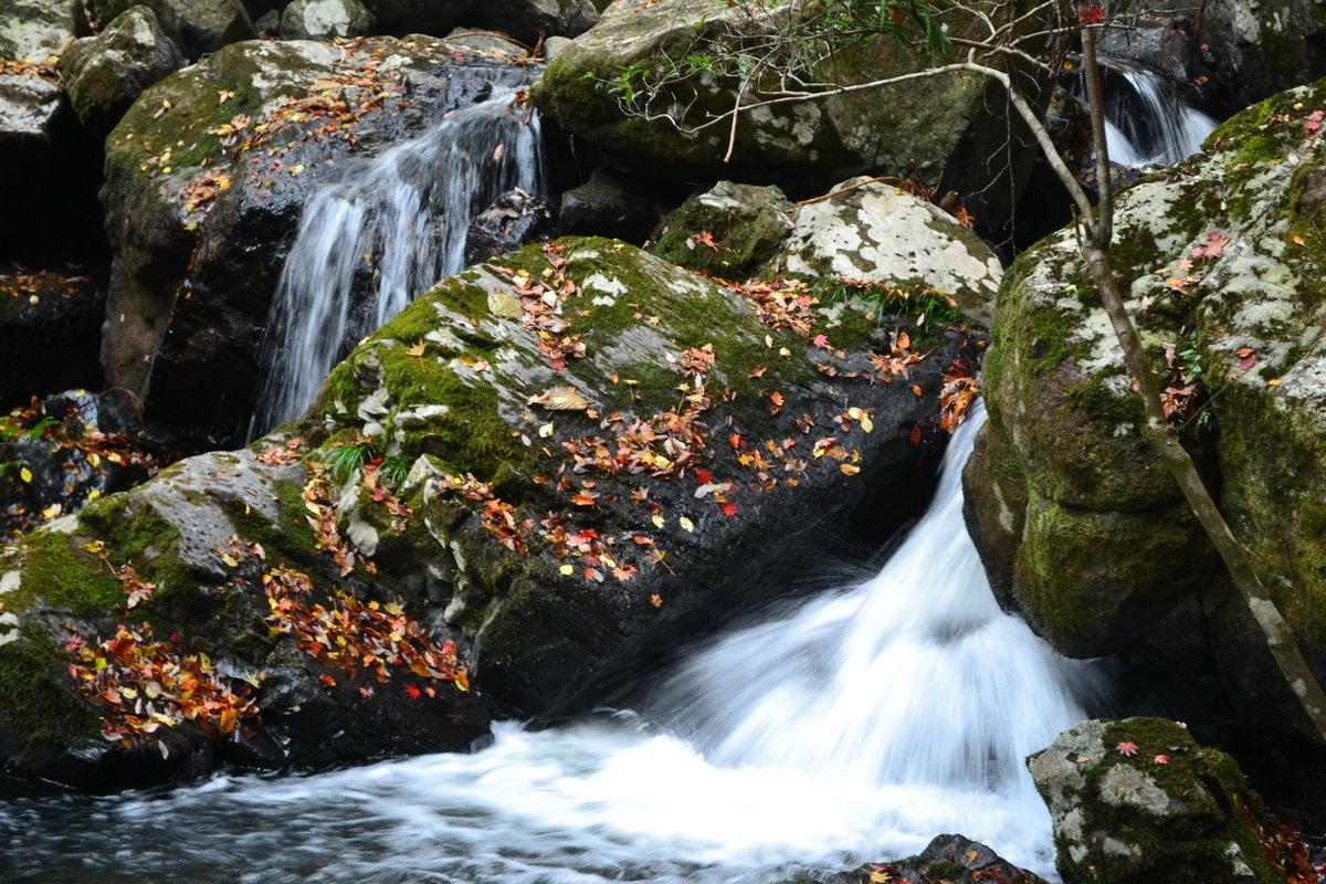 るり渓の紅葉 散りはじめ 2017年11月12日 撮影:MKタクシー