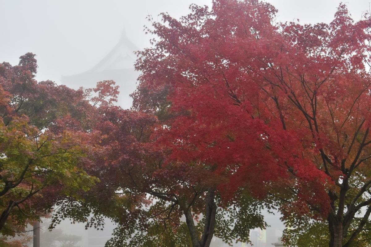 園部公園の紅葉 見頃 2019年11月9日 撮影:MKタクシー