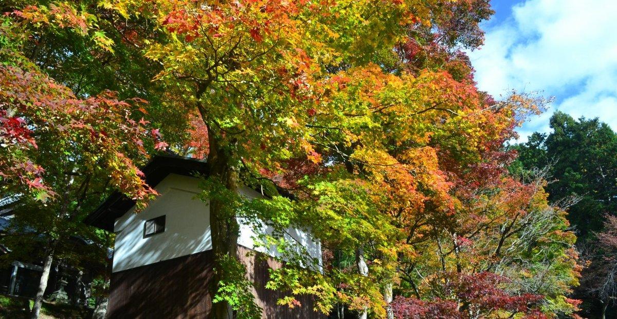 西光寺の紅葉 見頃 2017年11月12日 撮影:MKタクシー