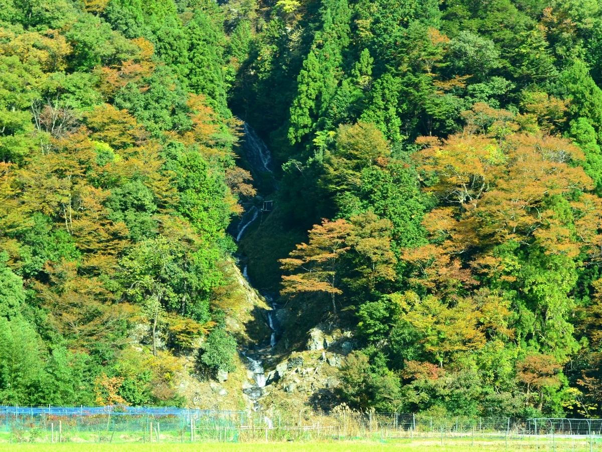 蓮如の滝の紅葉 見頃 2017年11月3日 撮影:MKタクシー