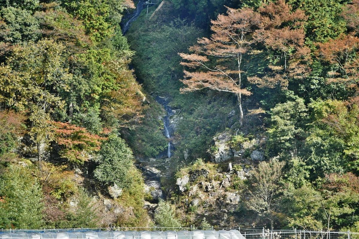 蓮如の滝の紅葉 見頃 2019年11月10日 撮影:MKタクシー