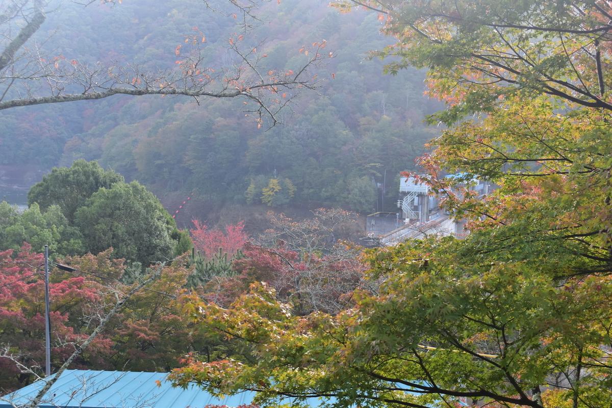 大野ダムの紅葉 色づきはじめ 2017年11月3日 撮影:MKタクシー