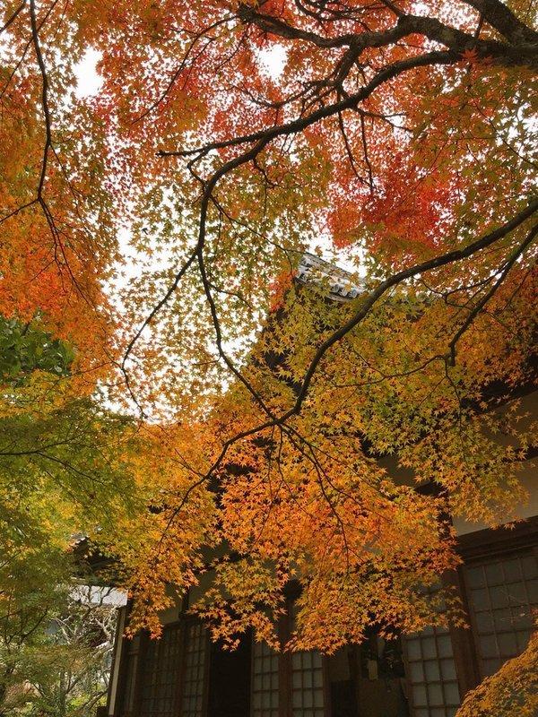 神蔵寺の紅葉 色づきはじめ 2019年11月4日 撮影:MKタクシー