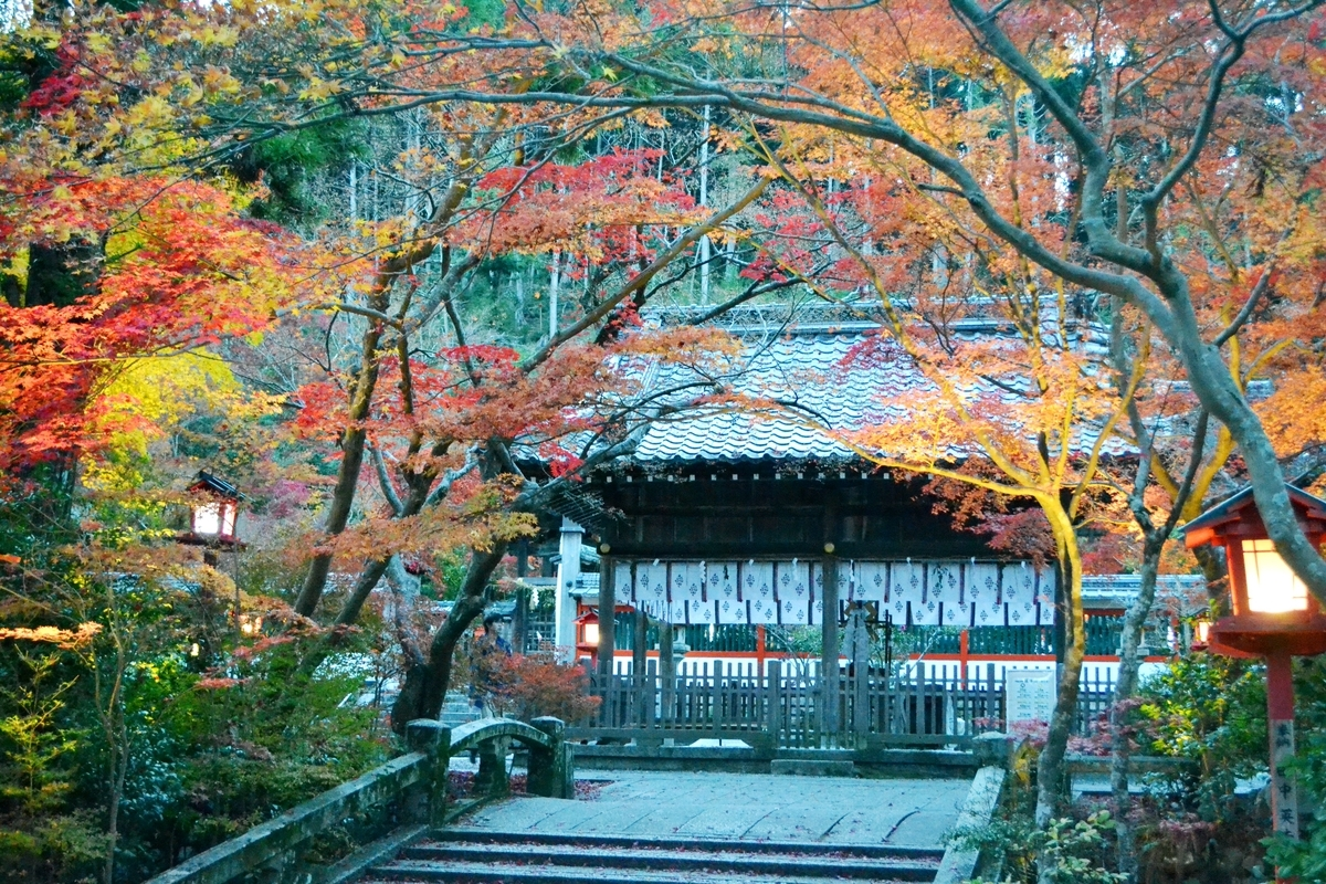 鍬山神社の紅葉ライトアップ 見頃 2017年11月12日 撮影:MKタクシー