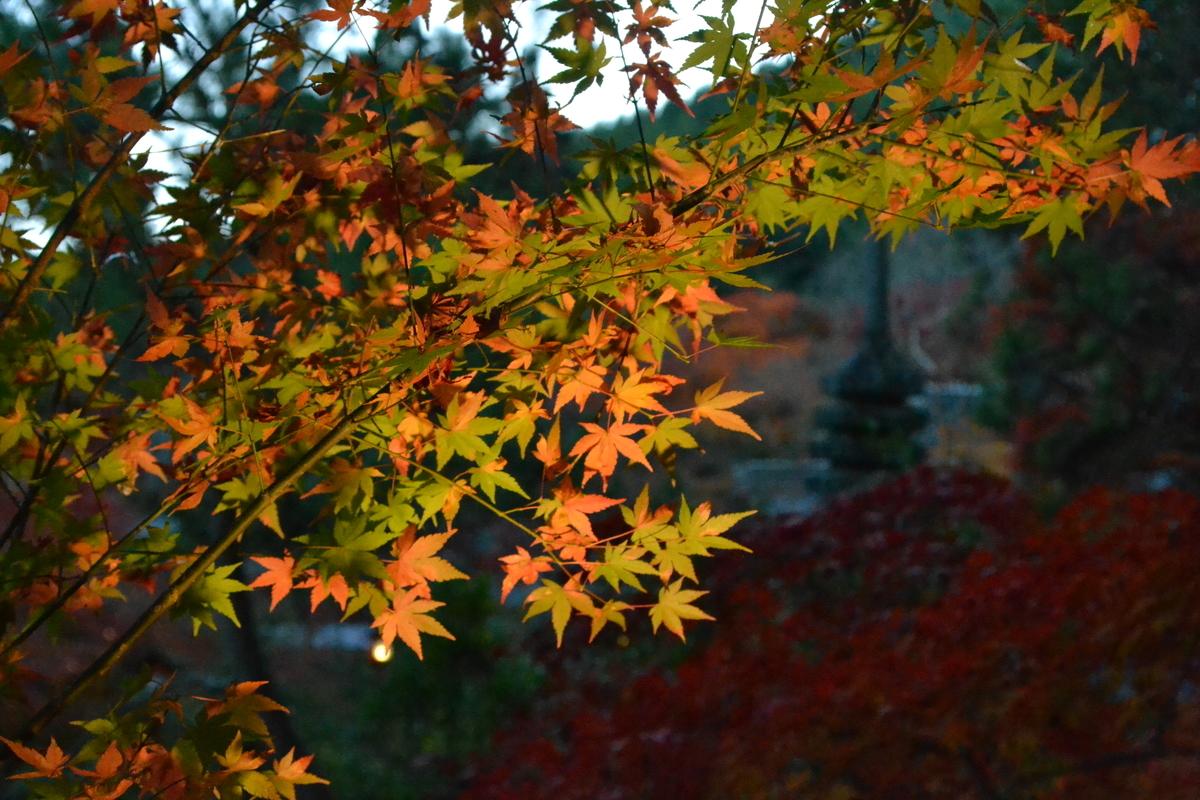 鍬山神社の紅葉 見頃 2016年11月11日 撮影:MKタクシー