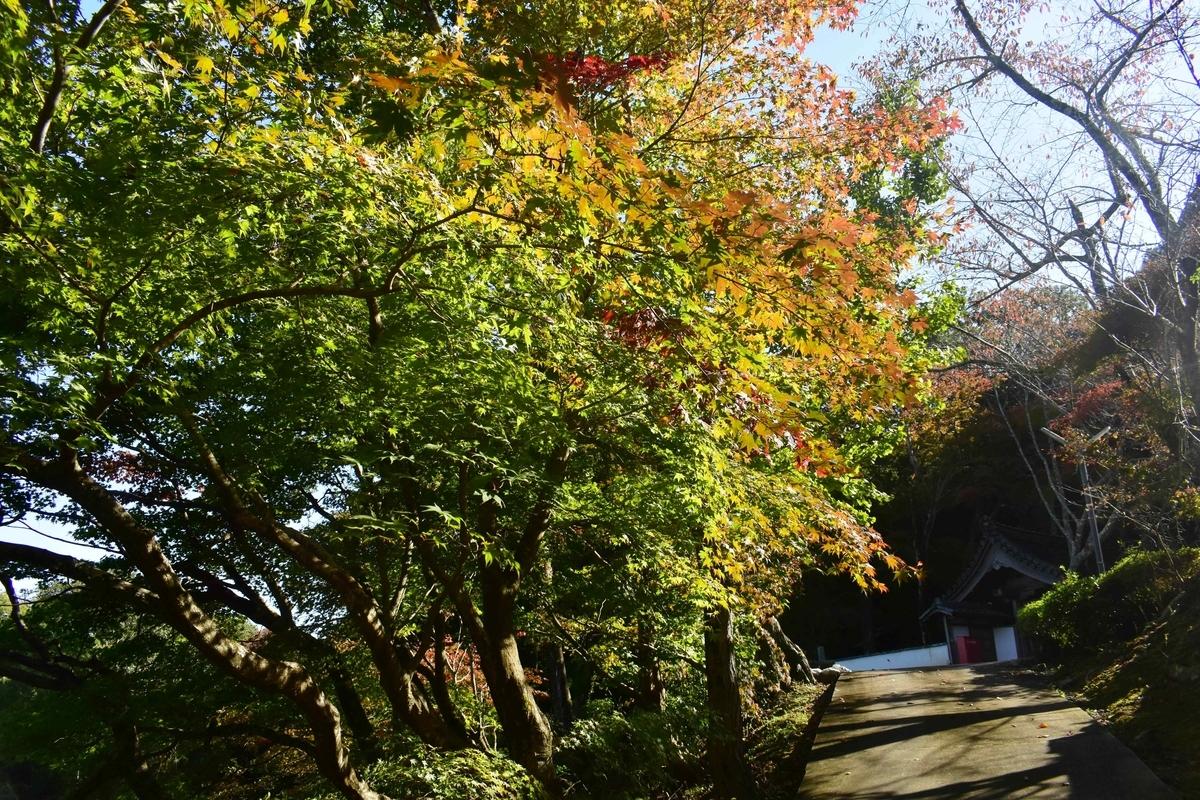 積善寺・裏参道の紅葉 色づきはじめ 2019年11月9日 撮影:MKタクシー