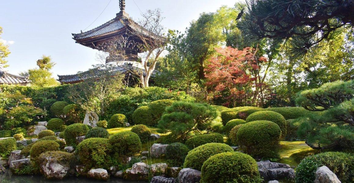 穴太寺・庭園の紅葉 色づきはじめ 2019年11月9日 撮影:MKタクシー