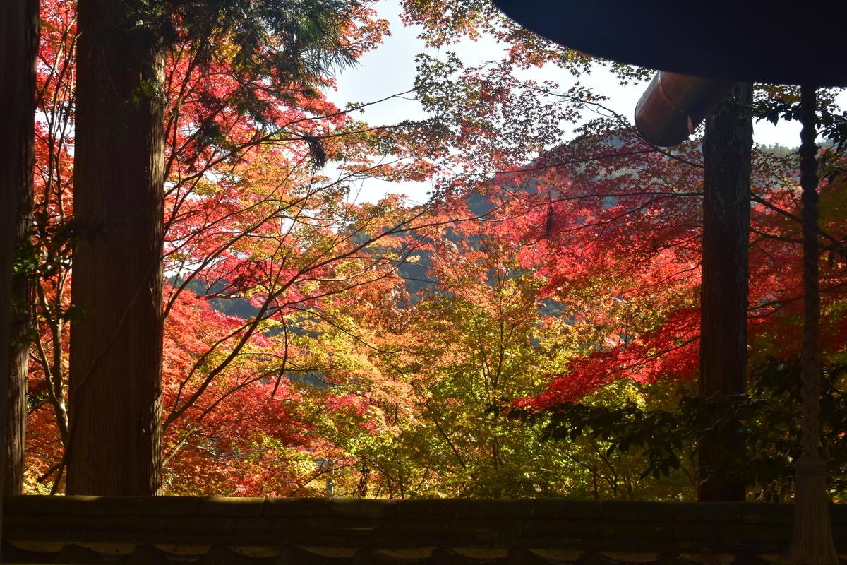 苗秀寺の紅葉 2019年11月9日 撮影:MKタクシー