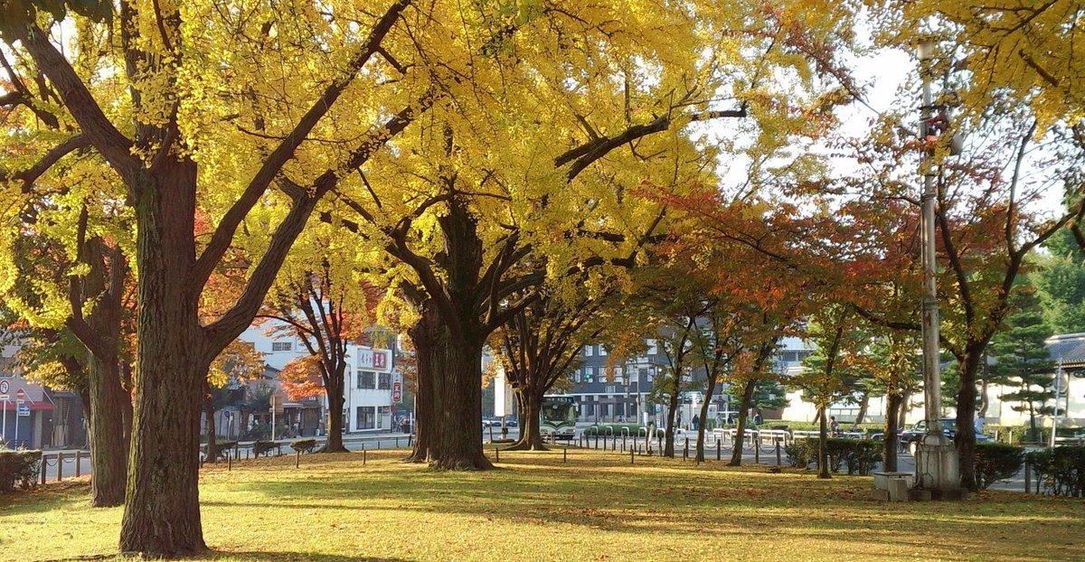 東本願寺前の銀杏 見頃 2013年11月17日 撮影:MKタクシー