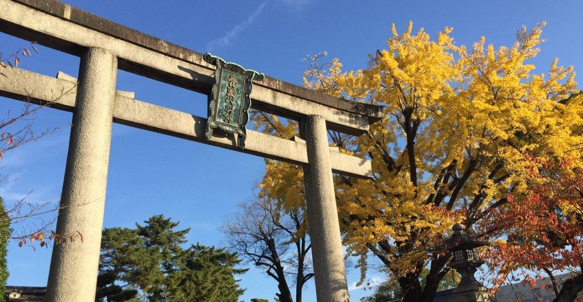 豊国神社のイチョウ 見頃 2016年11月16日 撮影:MKタクシー