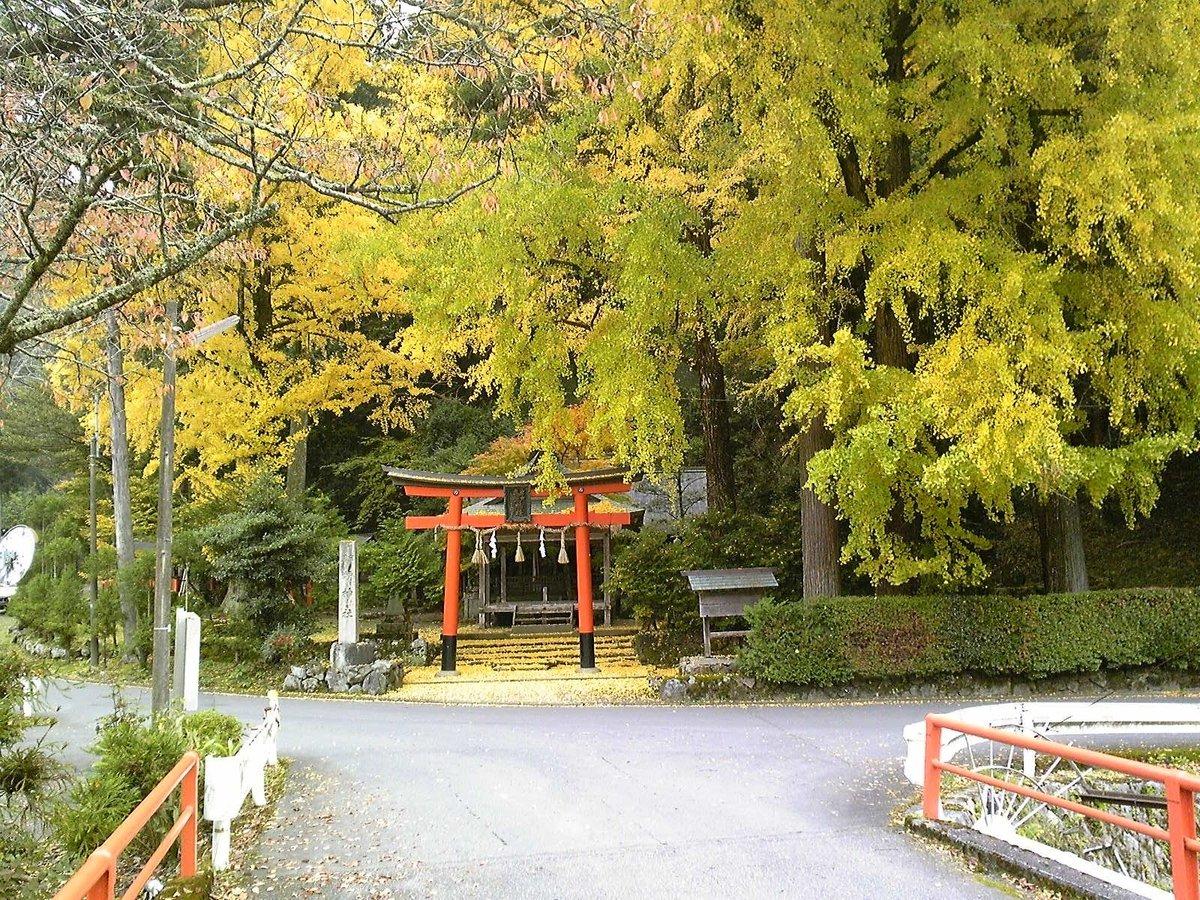 岩戸落葉神社のイチョウ 見頃近し 2009年11月10日 撮影:MKタクシー