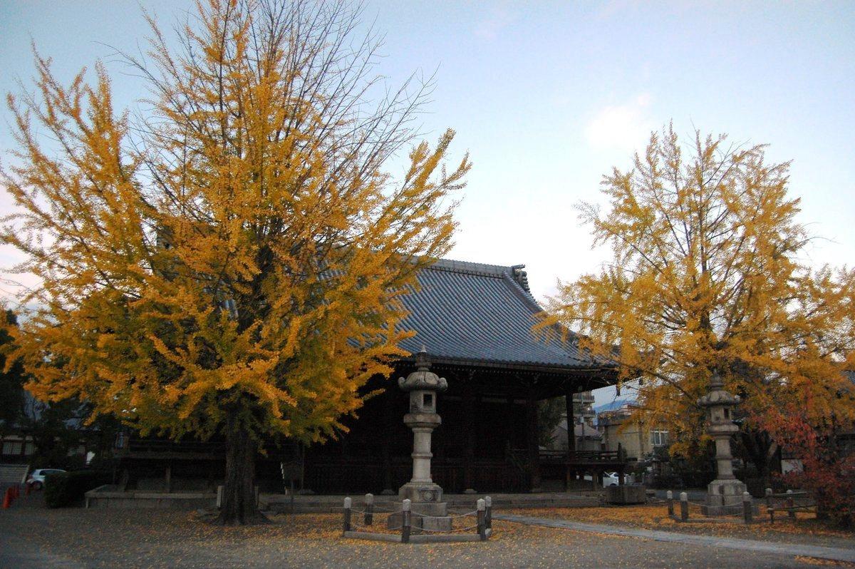 頂妙寺のイチョウ 見頃 2007年11月18日 撮影:MKタクシー