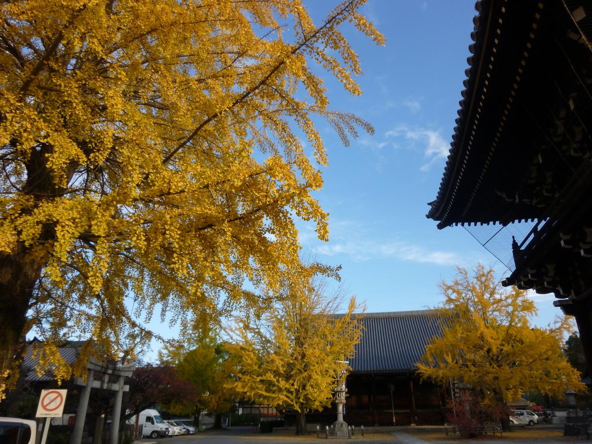 頂妙寺のイチョウ 見頃 2010年11月16日 撮影:MKタクシー