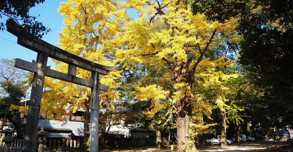 藤森神社のイチョウ 見頃 2007年11月24日 撮影:MKタクシー