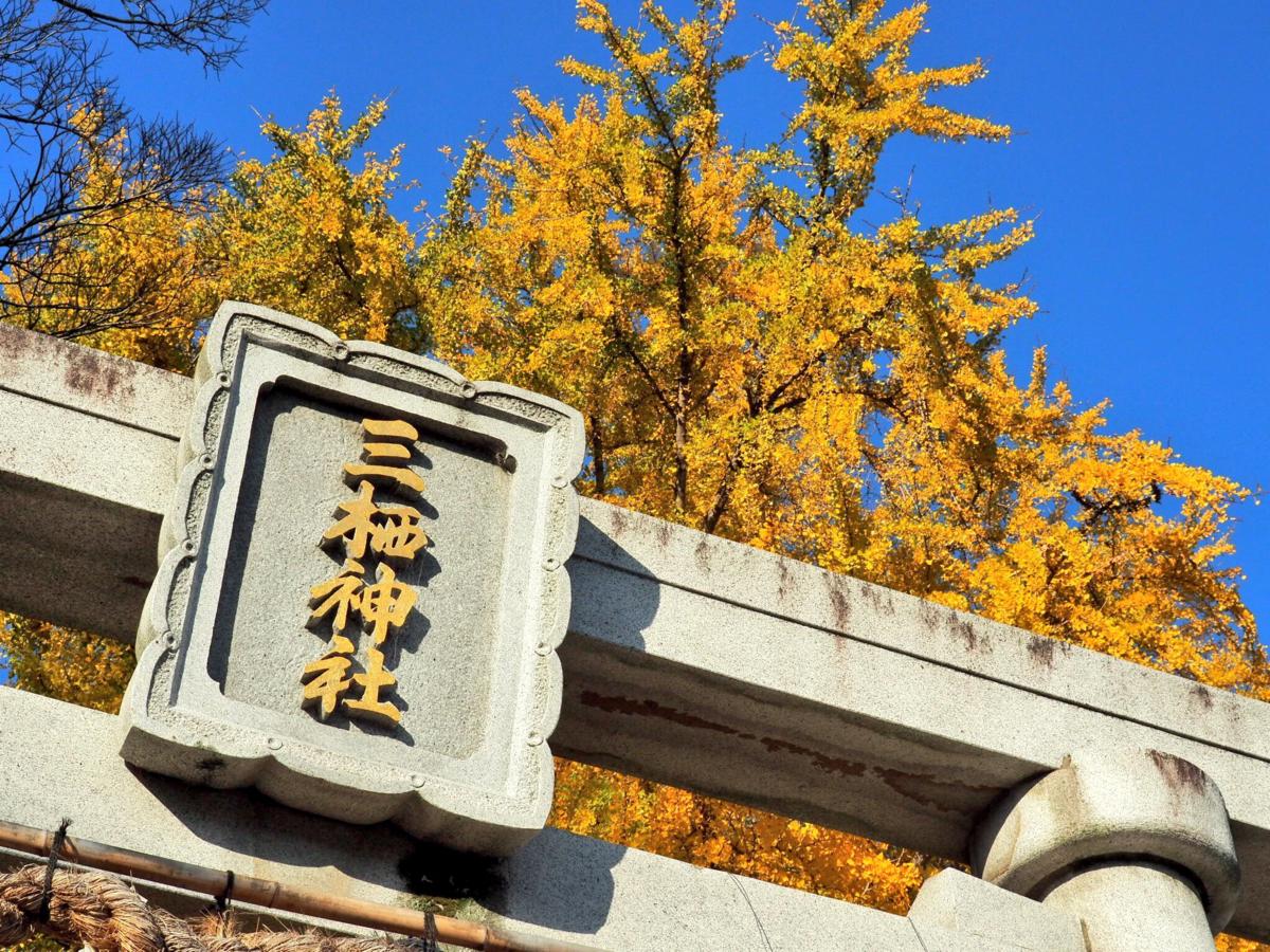 三栖神社のイチョウ 見頃 2017年12月3日 撮影:MKタクシー