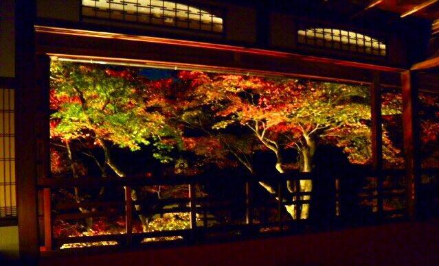 柳谷楊谷寺・上書院の紅葉ライトアップ 2018年11月23日 撮影:MKタクシー