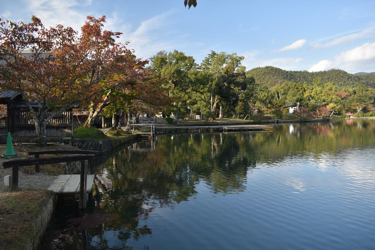大沢池・ソメイヨシノの紅葉 見頃近し 2020年10月29日 撮影:MKタクシー