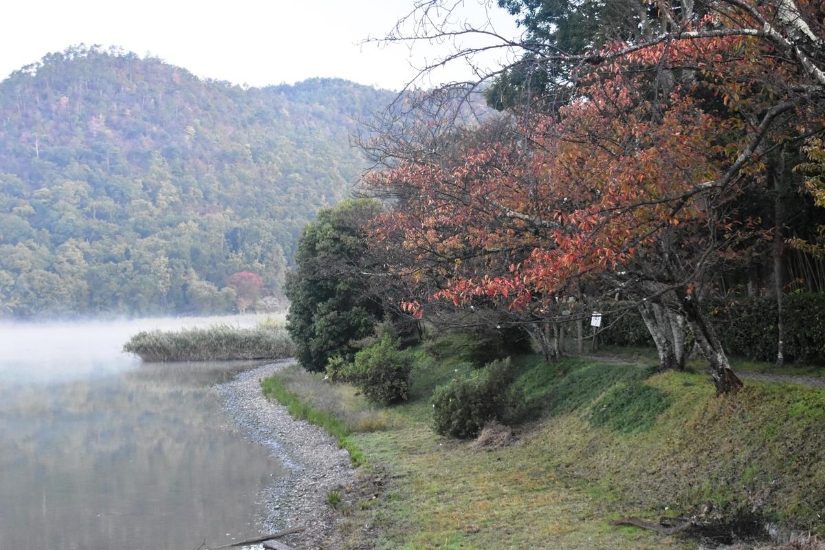 広沢池東岸の桜紅葉と沸き立つ霧 見頃 2019年11月7日 撮影:MKタクシー