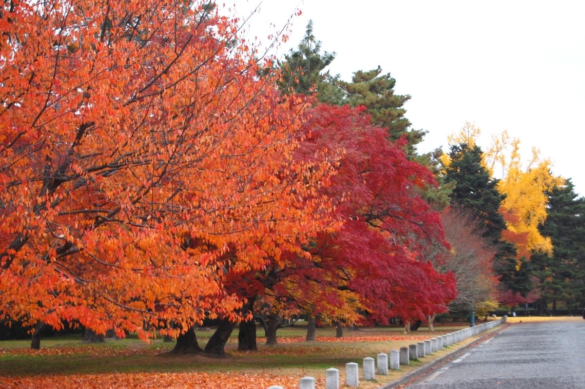 京都御苑・清所門前の桜紅葉 見頃 2007年11月29日 撮影:MKタクシー