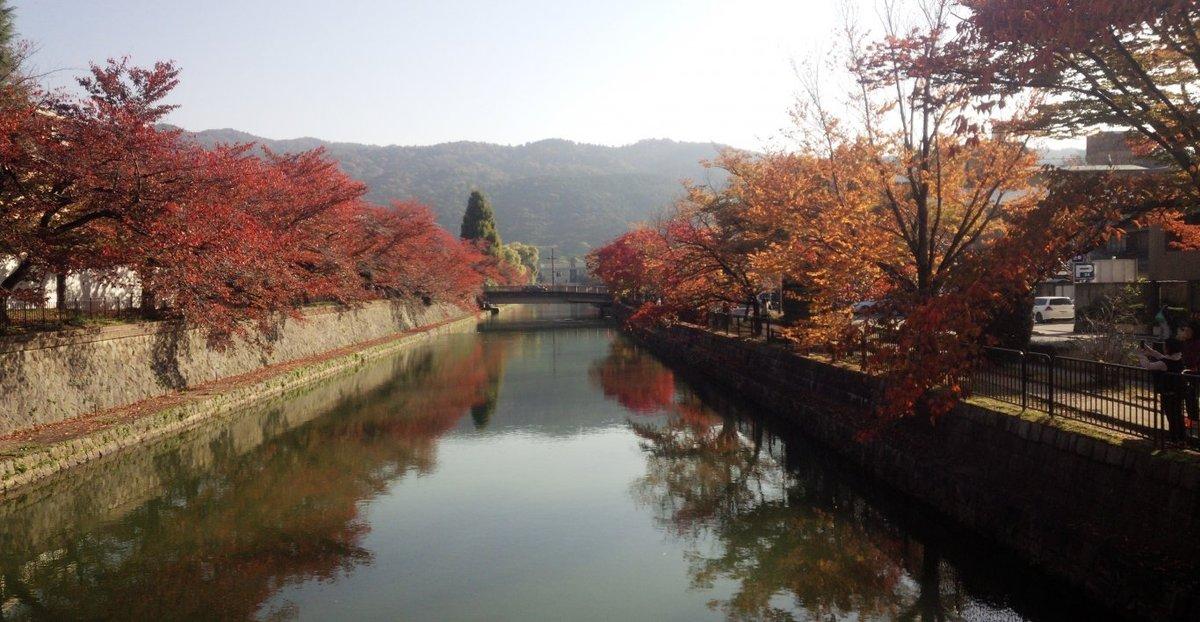 岡崎疎水の桜紅葉 見頃 2018年11月14日 撮影:MKタクシー