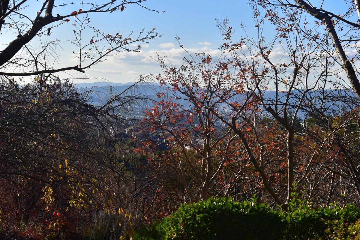 宇治市植物公園・サトザクラの桜紅葉 終わり近し 2018年11月24日 撮影:MKタクシー