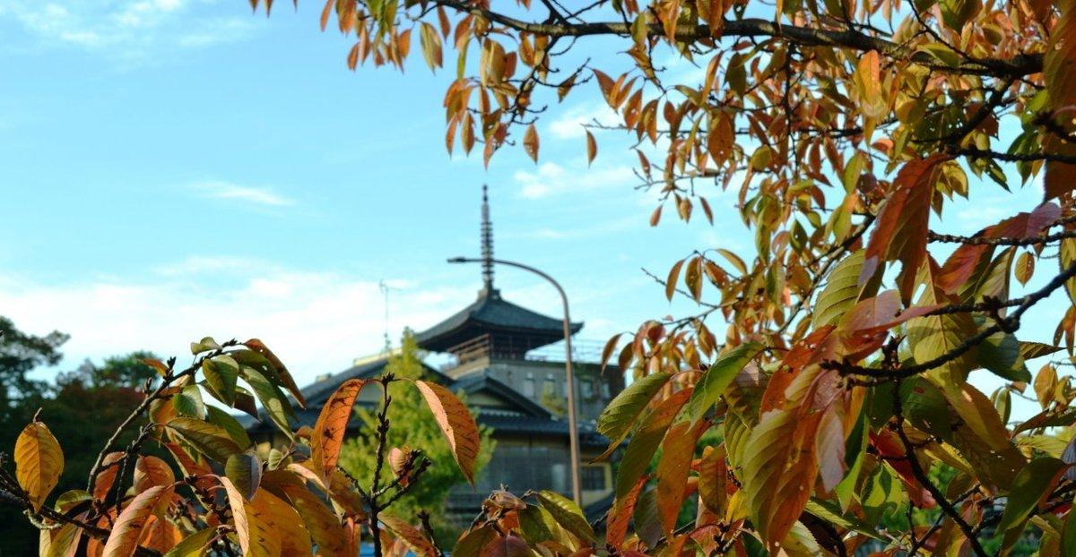 ねねの道の桜紅葉と八坂の塔 見頃近し 2017年11月2日 撮影:MKタクシー