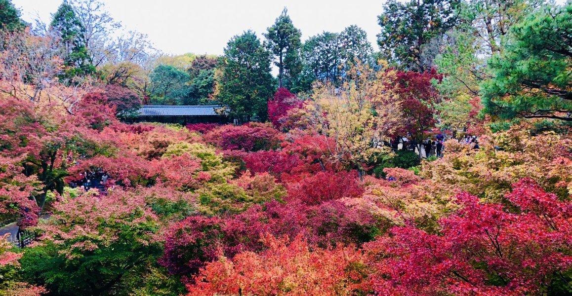 2015年11月19日 通天橋より通天橋 見頃 撮影:MKタクシー
