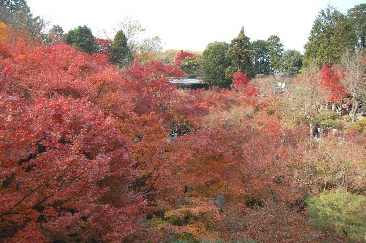 2007年12月2日 通天橋より臥雲橋 見頃 撮影:MKタクシー