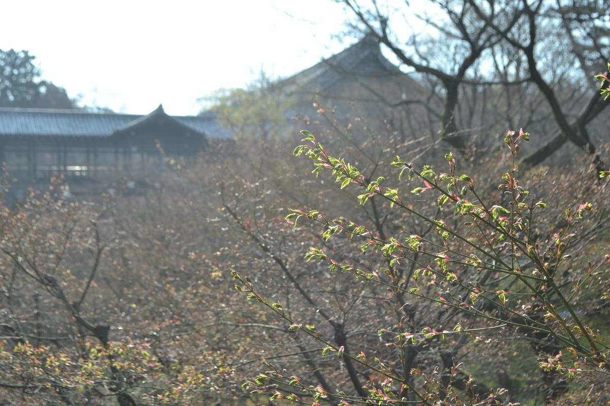 2017年4月5日 臥雲橋より通天橋 撮影:MKタクシー