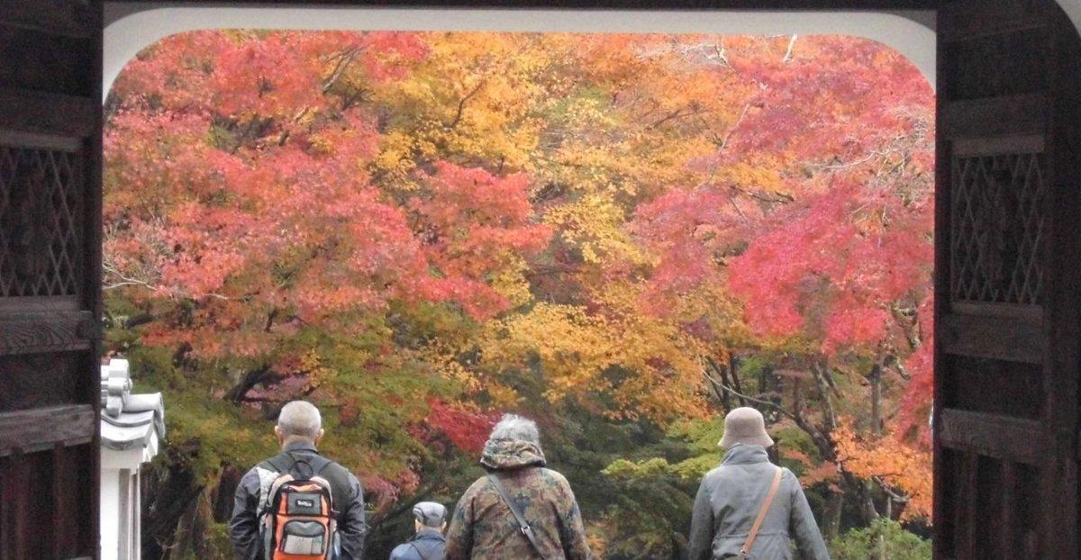 興聖寺・山門の紅葉 見頃 2016年11月20日 撮影:MKタクシー