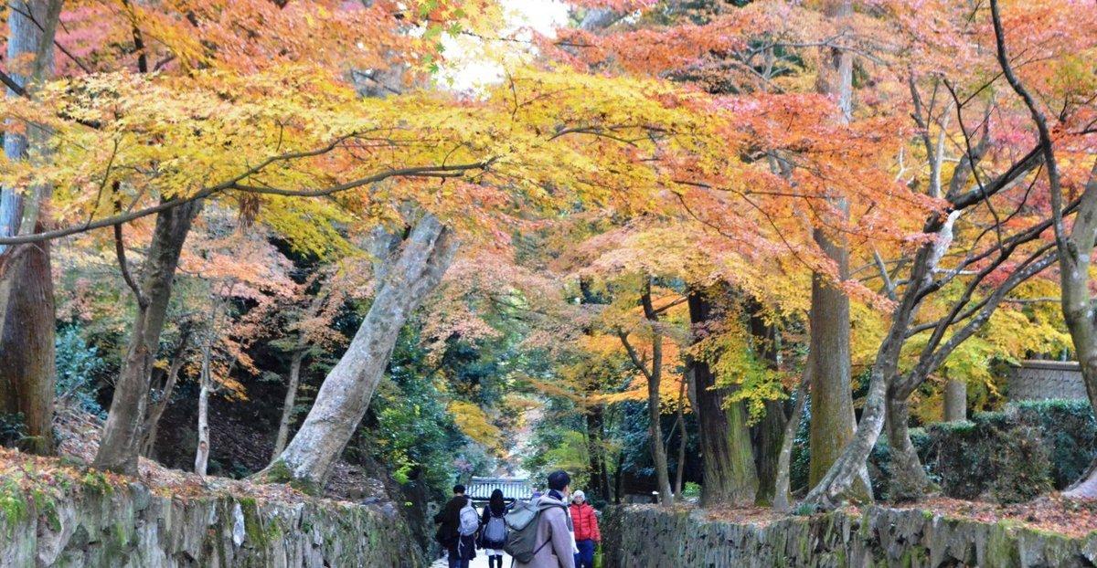 興聖寺・琴坂の紅葉 見頃 2107年12月2日 撮影:MKタクシー