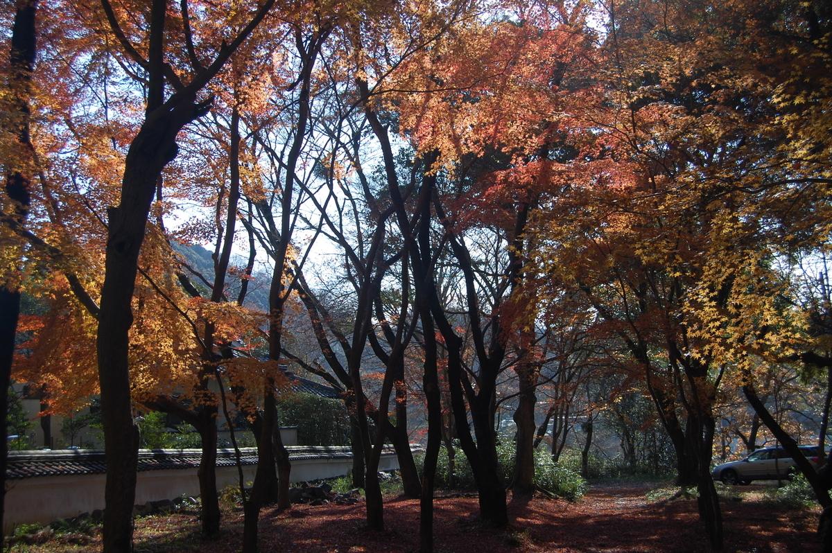 興聖寺・琴坂の紅葉 散りはじめ 2018年12月13日 撮影:MKタクシー